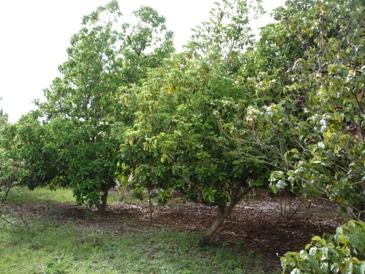 En pos de una cultura agroecológica sustentable
